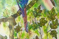 RAINBOW-BIRDS